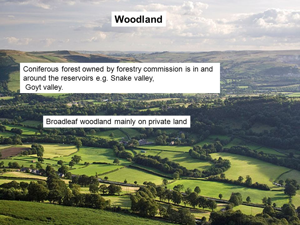 Woodland Coniferous forest owned by forestry commission is in and around the reservoirs e.g.