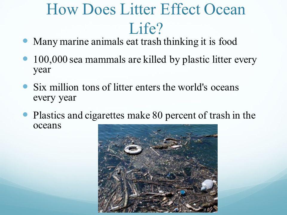 How Does Litter Effect Ocean Life.