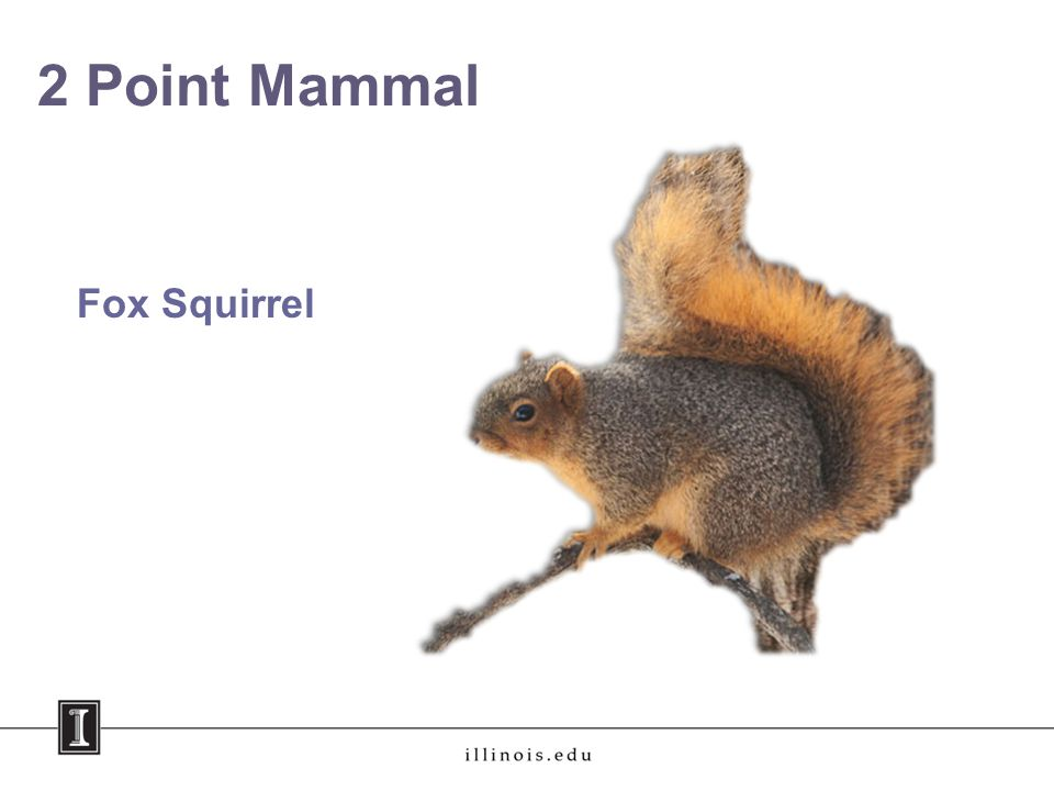 2 Point Mammal Fox Squirrel