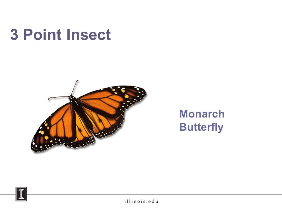 3 Point Insect Monarch Butterfly