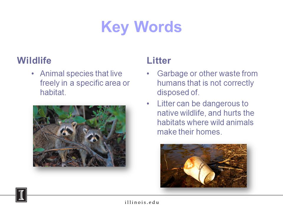 Key Words Wildlife Animal species that live freely in a specific area or habitat.