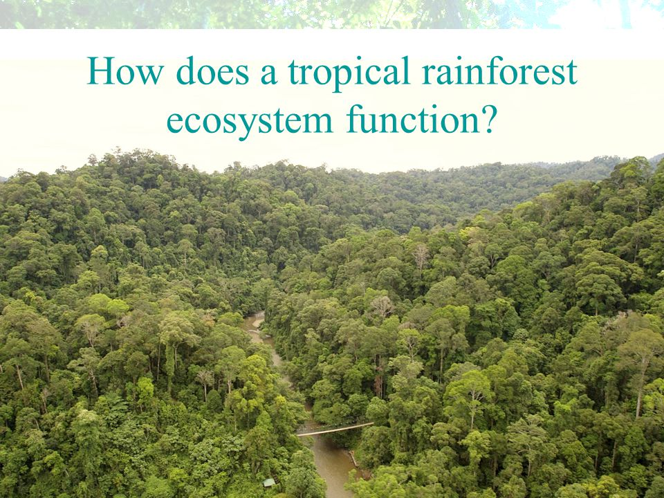 How are biotic and abiotic components linked in a tropical rainforest ecosystem.
