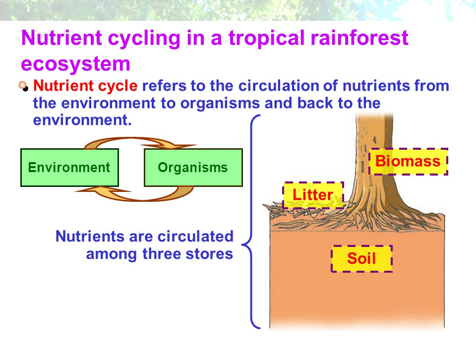 Nutrient cycle refers to the circulation of nutrients from the environment to organisms and back to the environment. EnvironmentOrganisms Nutrients ar