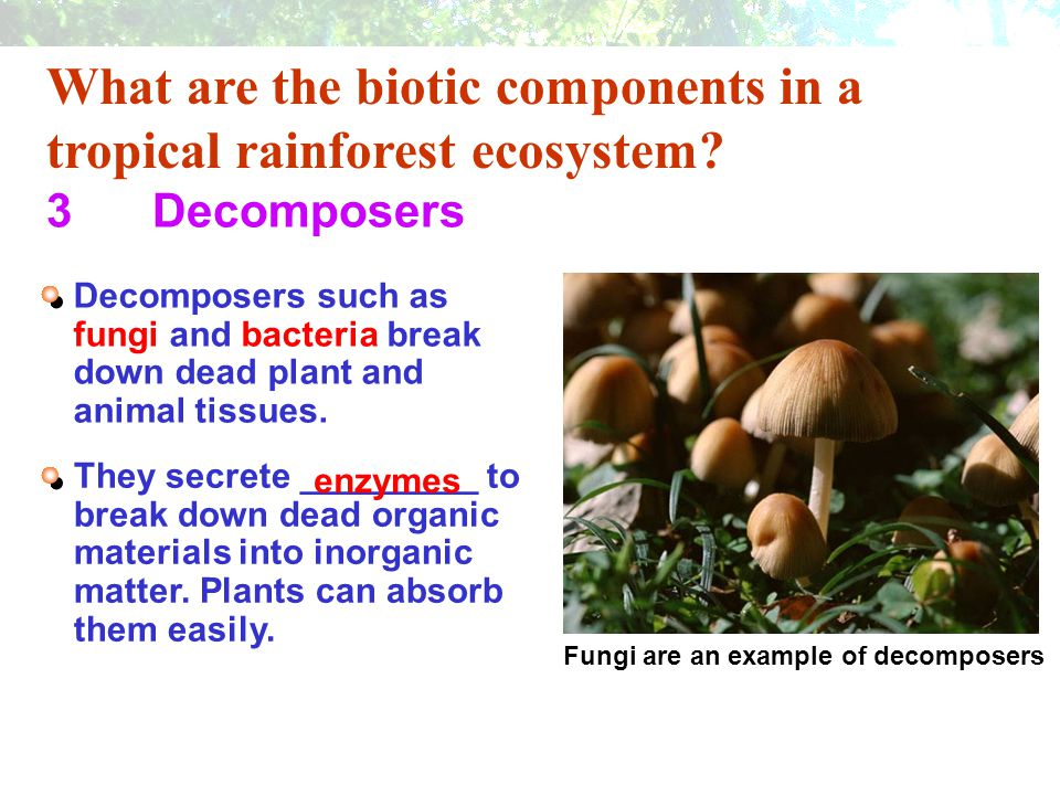 What are the abiotic components in a tropical rainforest ecosystem.