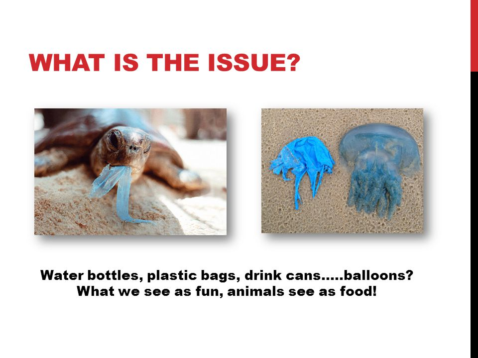 WHAT IS THE ISSUE. Water bottles, plastic bags, drink cans…..balloons.