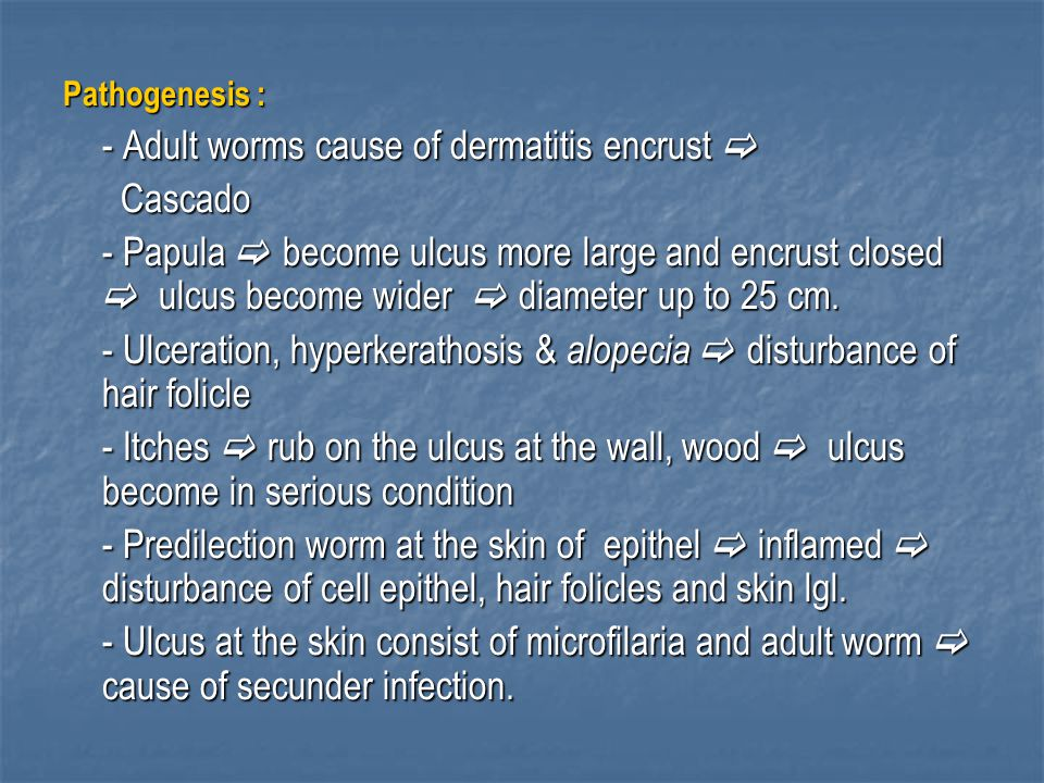 Pathogenesis : - Adult worms cause of dermatitis encrust  Cascado Cascado - Papula  become ulcus more large and encrust closed  ulcus become wider  diameter up to 25 cm.