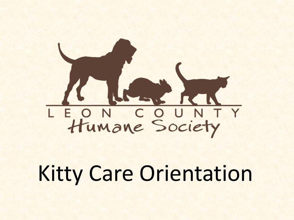 Kitty Care Orientation