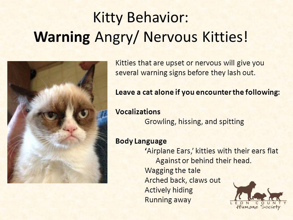 Kitty Behavior: Warning Angry/ Nervous Kitties.