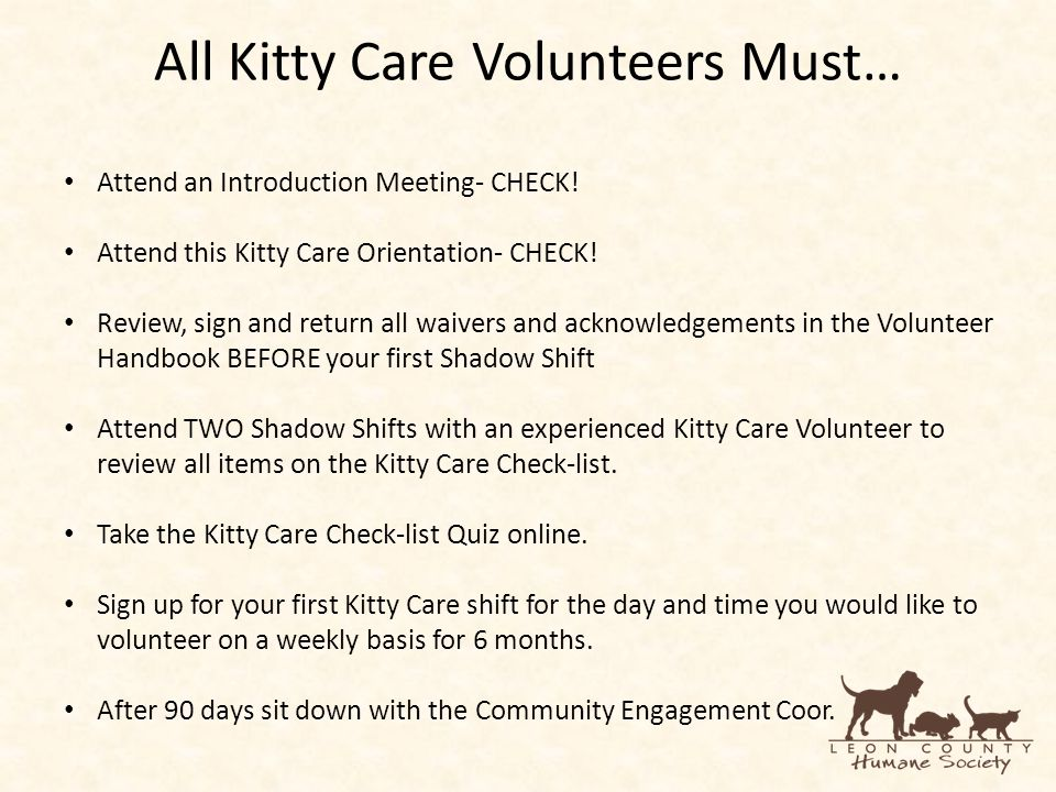 All Kitty Care Volunteers Must… Attend an Introduction Meeting- CHECK.