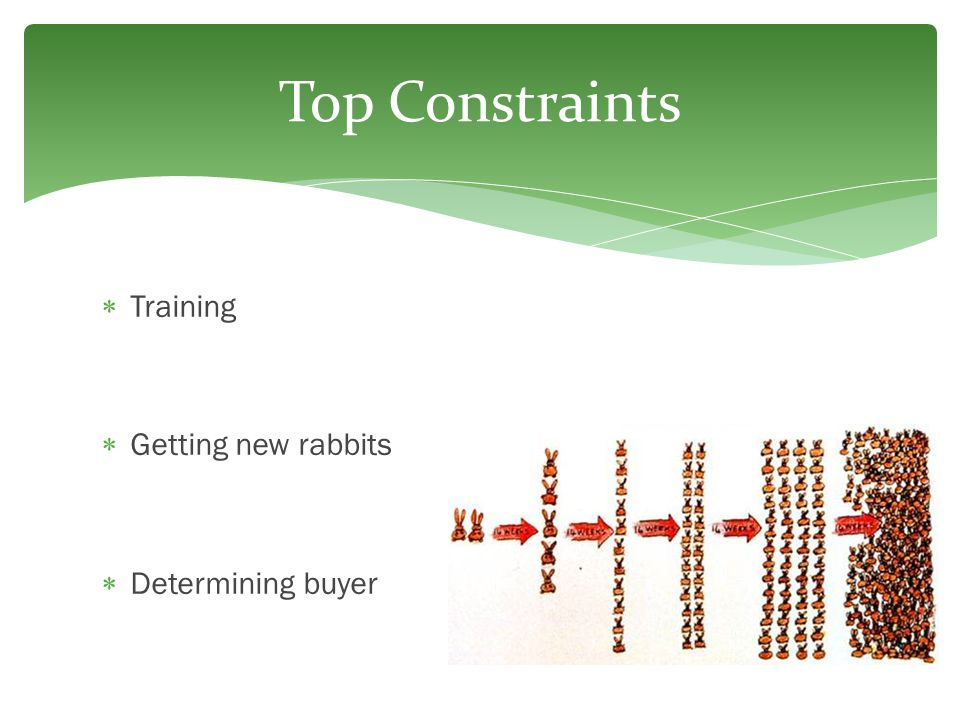  Training  Getting new rabbits  Determining buyer Top Constraints