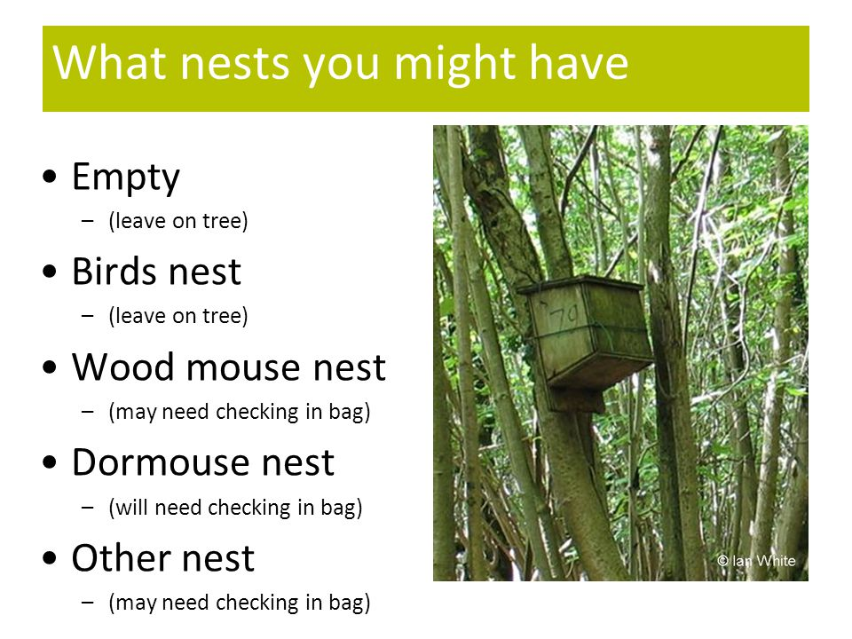 What nests you might have Empty –(leave on tree) Birds nest –(leave on tree) Wood mouse nest –(may need checking in bag) Dormouse nest –(will need checking in bag) Other nest –(may need checking in bag)