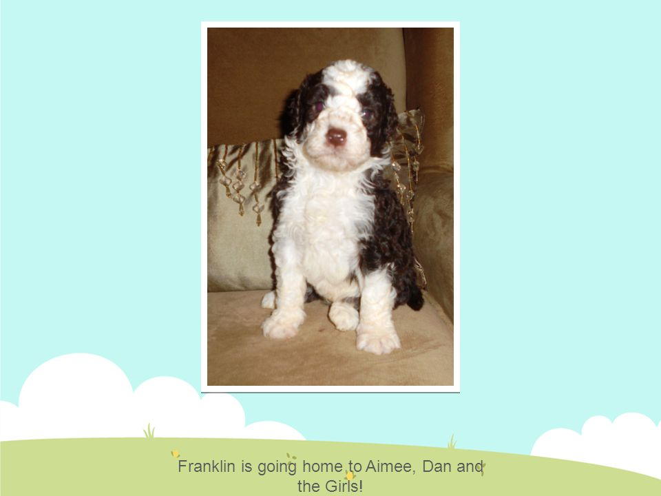 Franklin is going home to Aimee, Dan and the Girls!