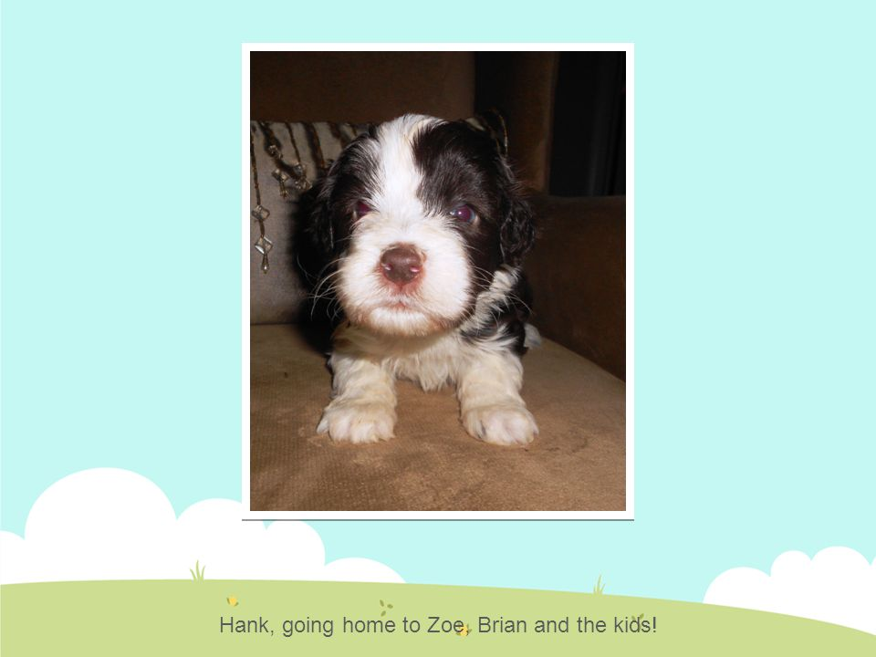 Hank, going home to Zoe, Brian and the kids!