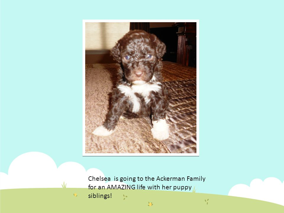 Chelsea is going to the Ackerman Family for an AMAZING life with her puppy siblings!