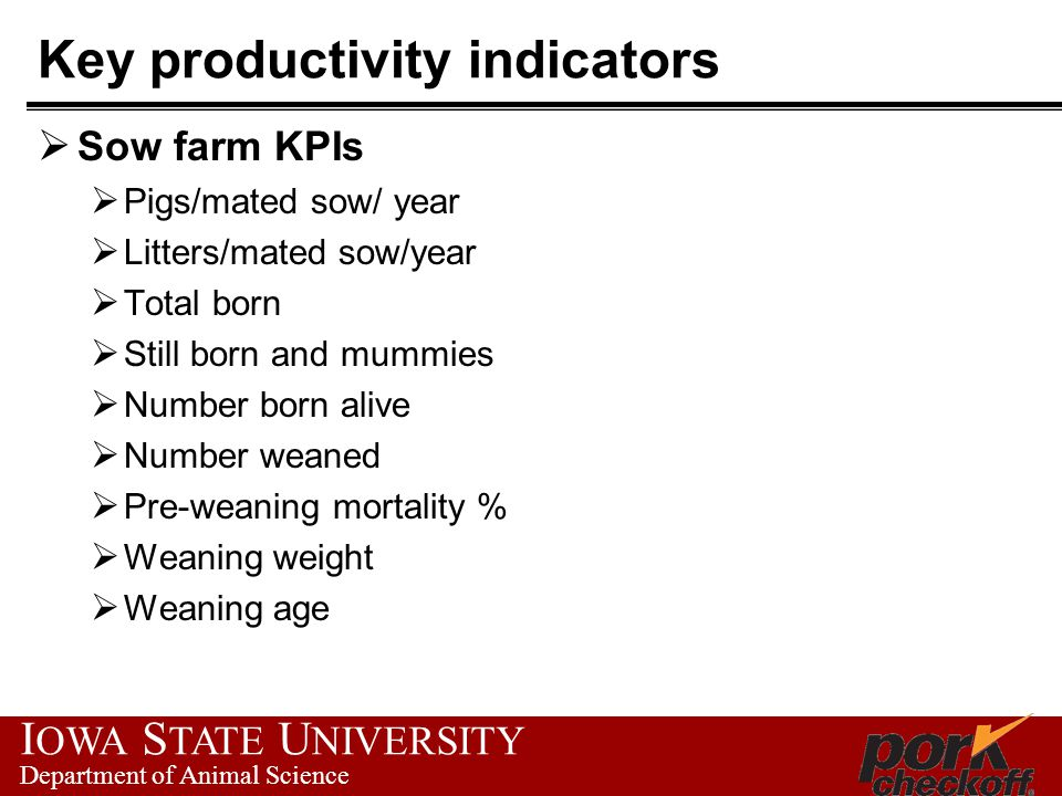 I OWA S TATE U NIVERSITY Department of Animal Science Key productivity indicators  Sow farm KPIs  Pigs/mated sow/ year  Litters/mated sow/year  Total born  Still born and mummies  Number born alive  Number weaned  Pre-weaning mortality %  Weaning weight  Weaning age