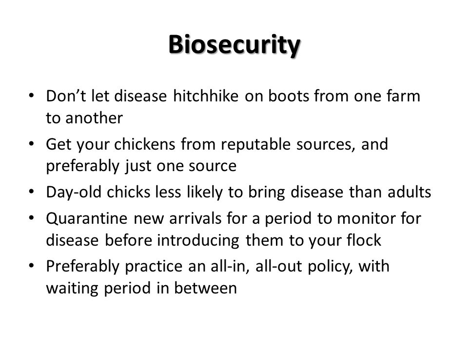 Biosecurity Don't let disease hitchhike on boots from one farm to another Get your chickens from reputable sources, and preferably just one source Day-old chicks less likely to bring disease than adults Quarantine new arrivals for a period to monitor for disease before introducing them to your flock Preferably practice an all-in, all-out policy, with waiting period in between