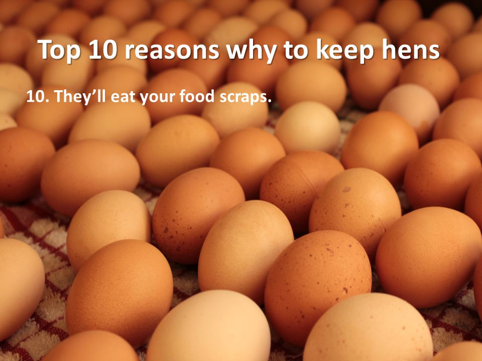 10. They'll eat your food scraps.