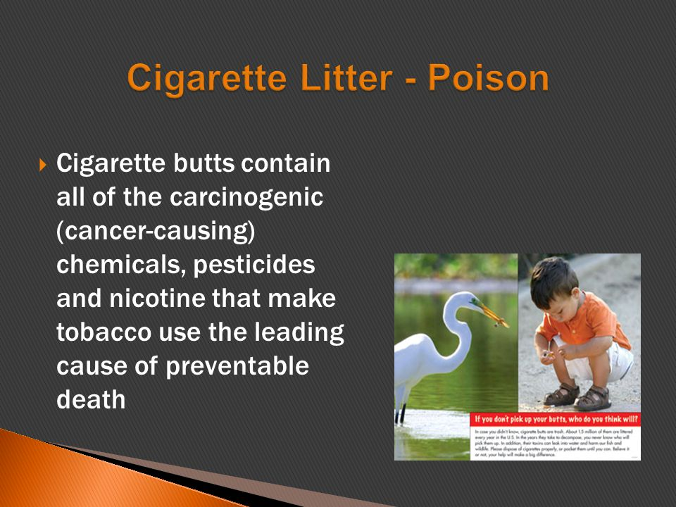  Cigarette butts contain all of the carcinogenic (cancer-causing) chemicals, pesticides and nicotine that make tobacco use the leading cause of preventable death