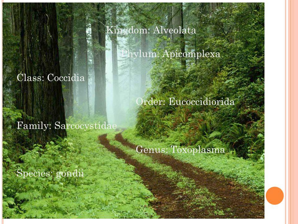 Kingdom: Alveolata Phylum: Apicomplexa Class: Coccidia Order: Eucoccidiorida Family: Sarcocystidae Genus: Toxoplasma Species: gondii