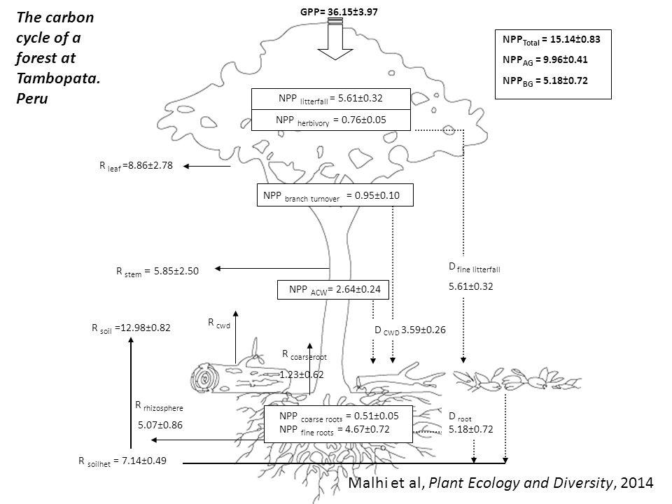 GPP= 36.15±3.97 The carbon cycle of a forest at Tambopata. Peru R leaf =8.86±2.78 R stem = 5.85±2.50 NPP Total = 15.14±0.83 NPP AG = 9.96±0.41 NPP BG