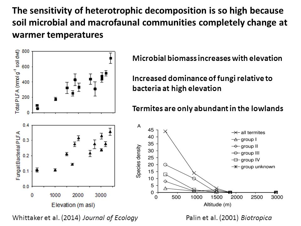The sensitivity of heterotrophic decomposition is so high because soil microbial and macrofaunal communities completely change at warmer temperatures