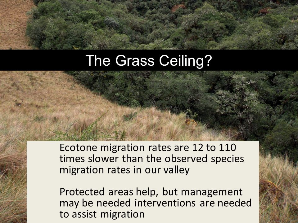 The Grass Ceiling? Ecotone migration rates are 12 to 110 times slower than the observed species migration rates in our valley Protected areas help, bu