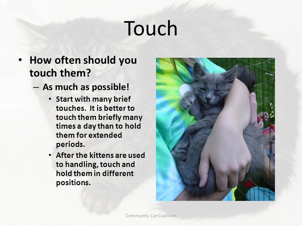 Touch How often should you touch them? – As much as possible! Start with many brief touches. It is better to touch them briefly many times a day than