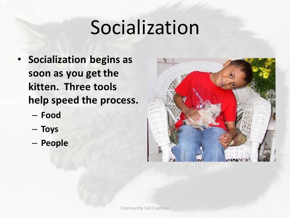 Socialization Socialization begins as soon as you get the kitten. Three tools help speed the process. – Food – Toys – People Community Cat Coalition