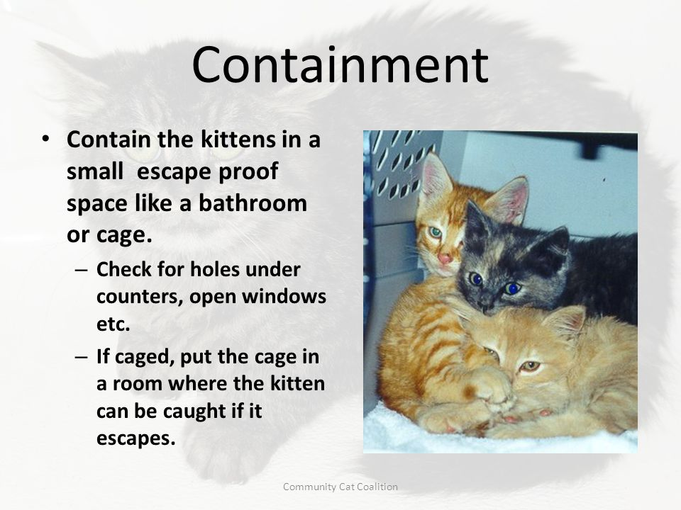 Containment Contain the kittens in a small escape proof space like a bathroom or cage. – Check for holes under counters, open windows etc. – If caged,