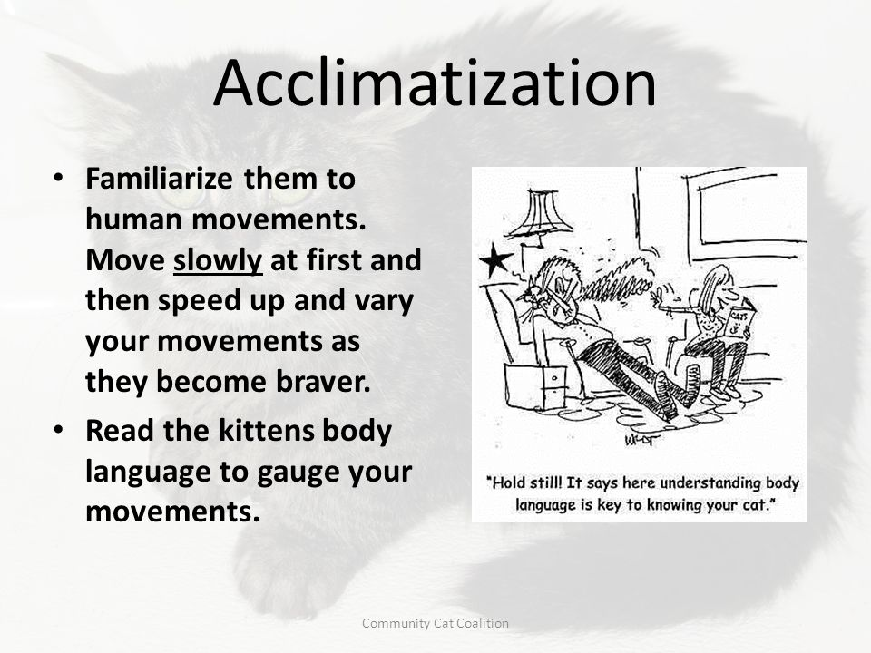 Acclimatization Familiarize them to human movements. Move slowly at first and then speed up and vary your movements as they become braver. Read the ki