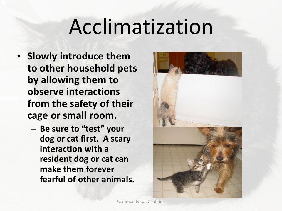 Acclimatization Slowly introduce them to other household pets by allowing them to observe interactions from the safety of their cage or small room. –