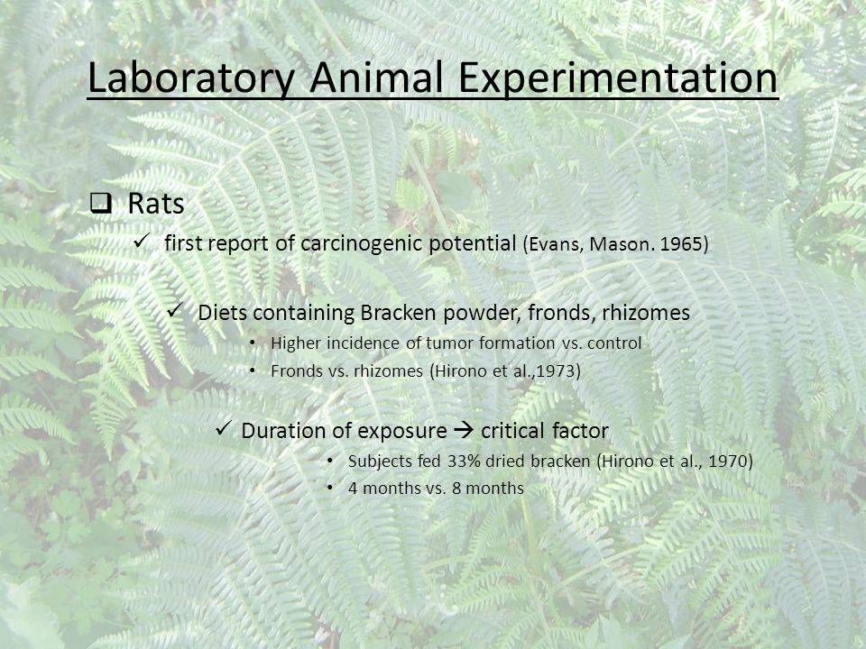 Laboratory Animal Experimentation  Rats first report of carcinogenic potential (Evans, Mason. 1965) Diets containing Bracken powder, fronds, rhizomes