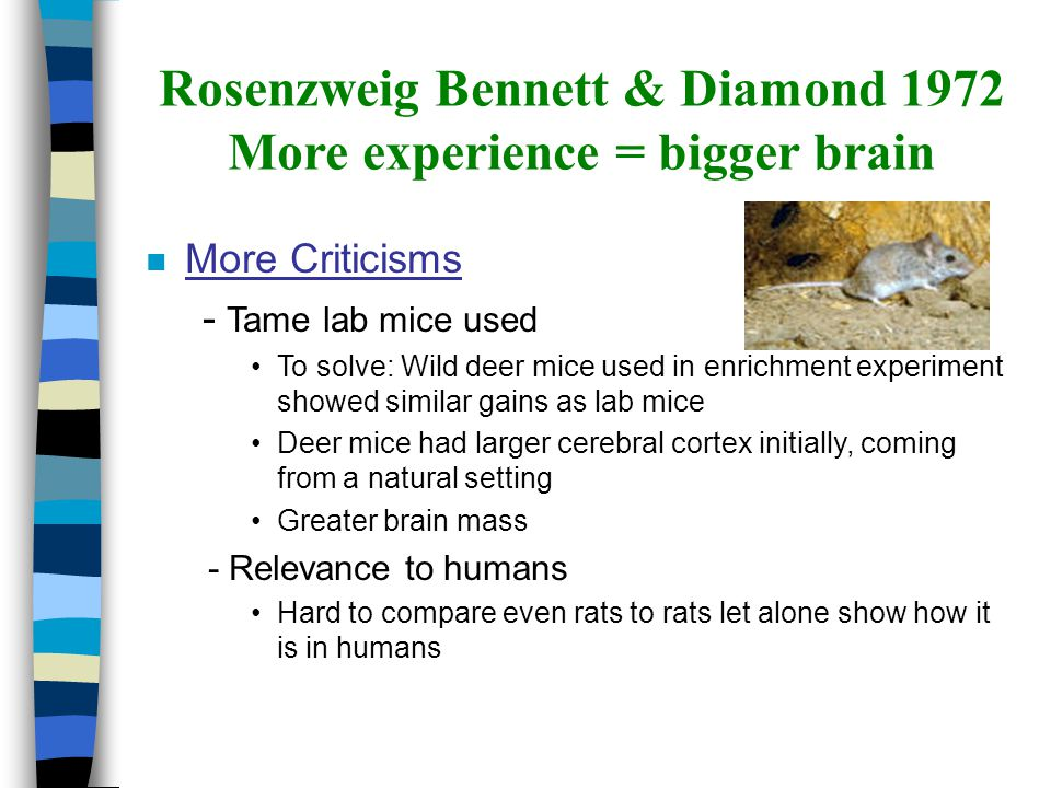 nMnMore Criticisms - Tame lab mice used To solve: Wild deer mice used in enrichment experiment showed similar gains as lab mice Deer mice had larger c