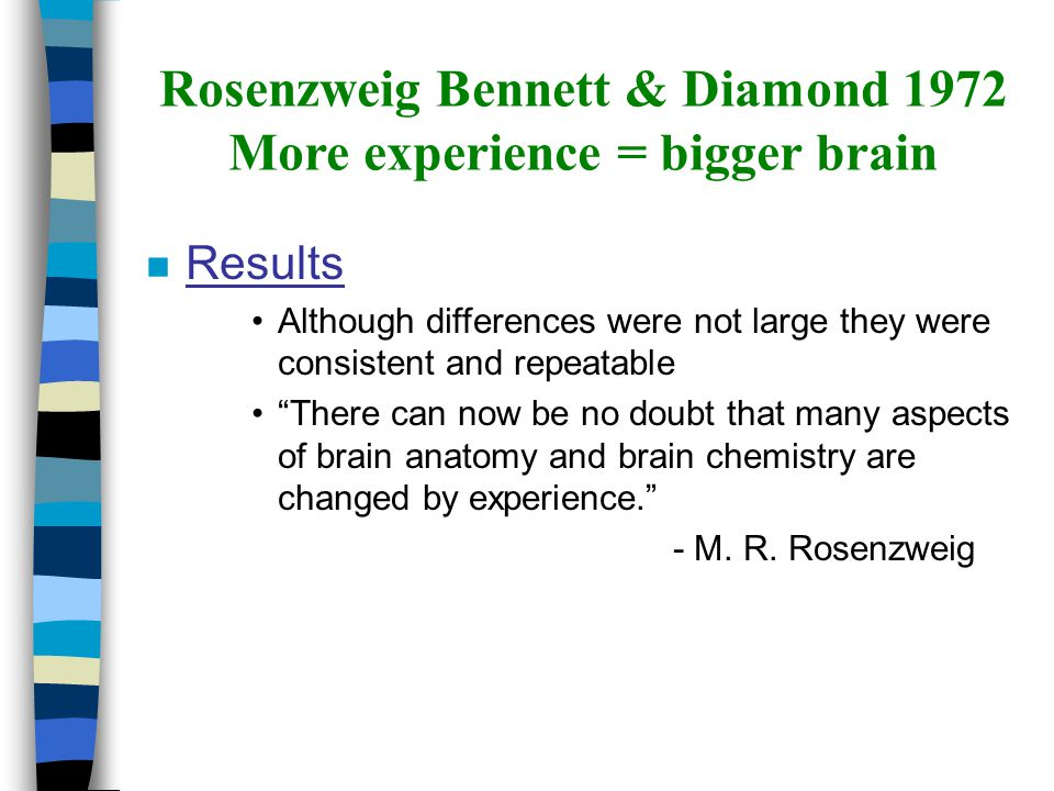 """Rosenzweig Bennett & Diamond 1972 More experience = bigger brain n Results Although differences were not large they were consistent and repeatable """"Th"""