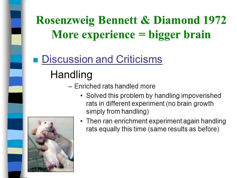 nDnDiscussion and Criticisms –S–Stress –I–Impoverished rats had stressful life –C–Completed another experiment to show stress differences Rosenzweig Bennett & Diamond 1972 More experience = bigger brain