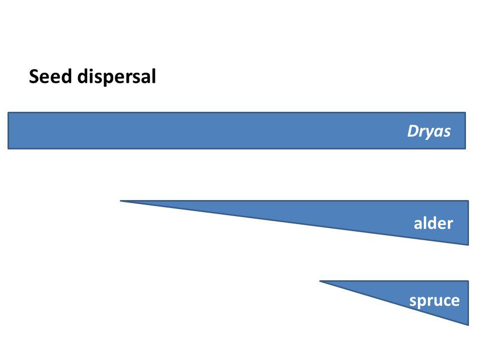 Seed dispersal spruce alder Dryas