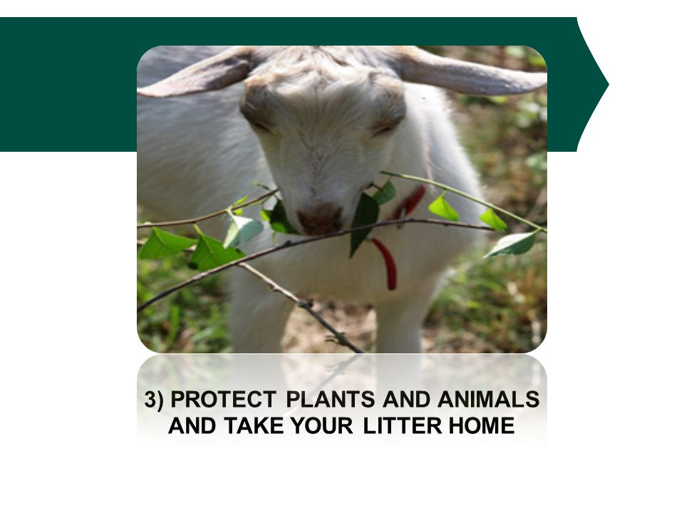 3) PROTECT PLANTS AND ANIMALS AND TAKE YOUR LITTER HOME