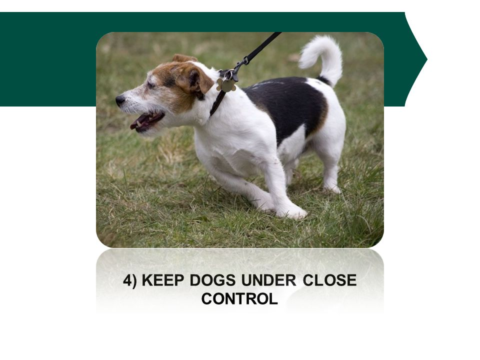 4) KEEP DOGS UNDER CLOSE CONTROL