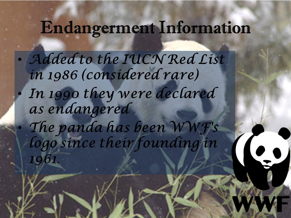 Endangerment Information Added to the IUCN Red List in 1986 (considered rare) In 1990 they were declared as endangered The panda has been WWF's logo s