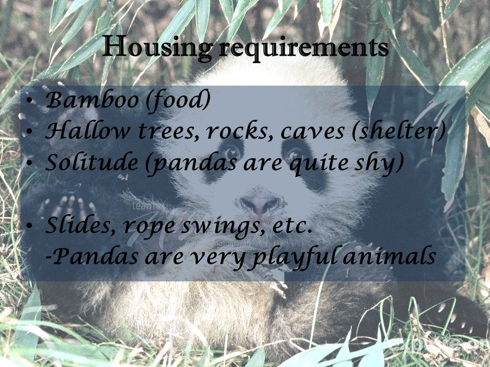 Housing requirements Bamboo (food) Hallow trees, rocks, caves (shelter) Solitude (pandas are quite shy) Slides, rope swings, etc. -Pandas are very pla