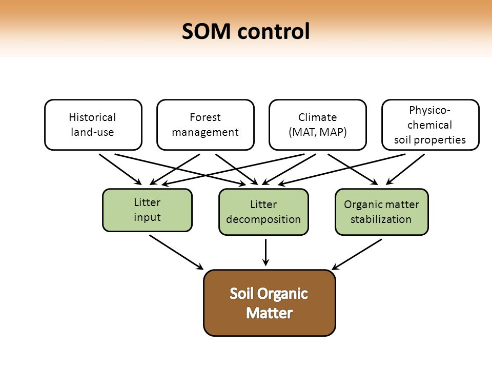 SOM control Litter decomposition Organic matter stabilization Historical land-use Forest management Climate (MAT, MAP) Physico- chemical soil properties Litter input