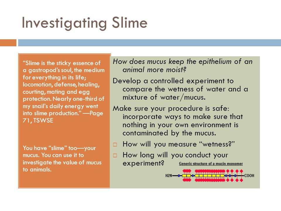 "Investigating Slime ""Slime is the sticky essence of a gastropod's soul, the medium for everything in its life; locomotion, defense, healing, courting,"