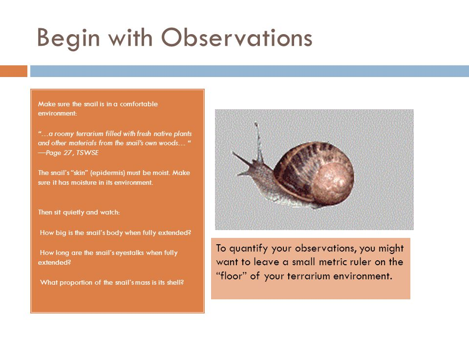 "Begin with Observations Make sure the snail is in a comfortable environment: ""…a roomy terrarium filled with fresh native plants and other materials f"