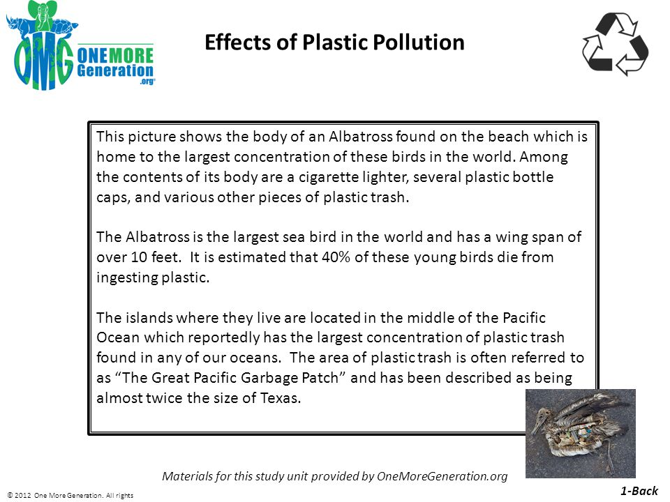 Effects of Plastic Pollution Materials for this study unit provided by OneMoreGeneration.org This picture shows the body of an Albatross found on the beach which is home to the largest concentration of these birds in the world.