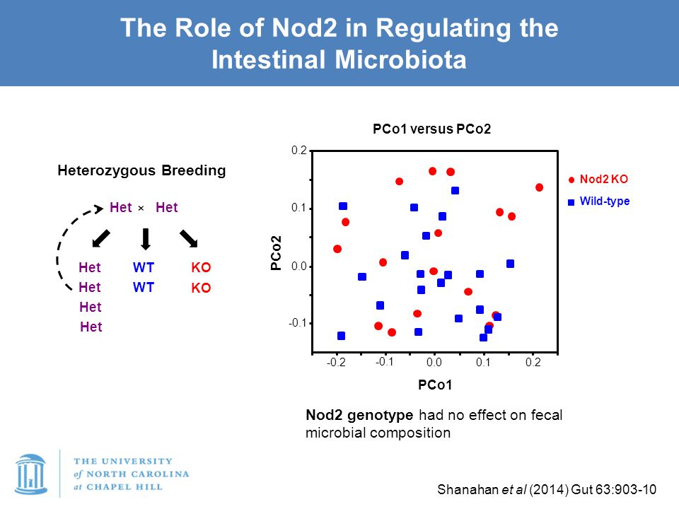 The Role of Nod2 in Regulating the Intestinal Microbiota 0.2 0.1 0.0 -0.1 -0.2 -0.1 0.0 0.1 0.2 PCo2 PCo1 Shanahan et al (2014) Gut 63:903-10 Nod2 KO Wild-type PCo1 versus PCo2 Nod2 genotype had no effect on fecal microbial composition Het × WT KO Het Heterozygous Breeding