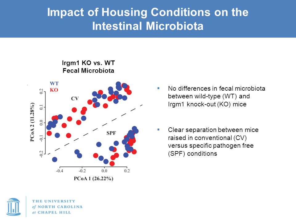 Impact of Housing Conditions on the Intestinal Microbiota  No differences in fecal microbiota between wild-type (WT) and Irgm1 knock-out (KO) mice 
