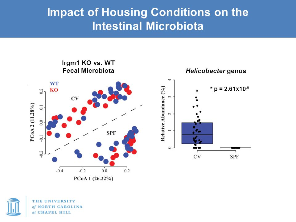 Impact of Housing Conditions on the Intestinal Microbiota Irgm1 KO vs. WT Fecal Microbiota * p = 2.61x10 -9 Helicobacter genus