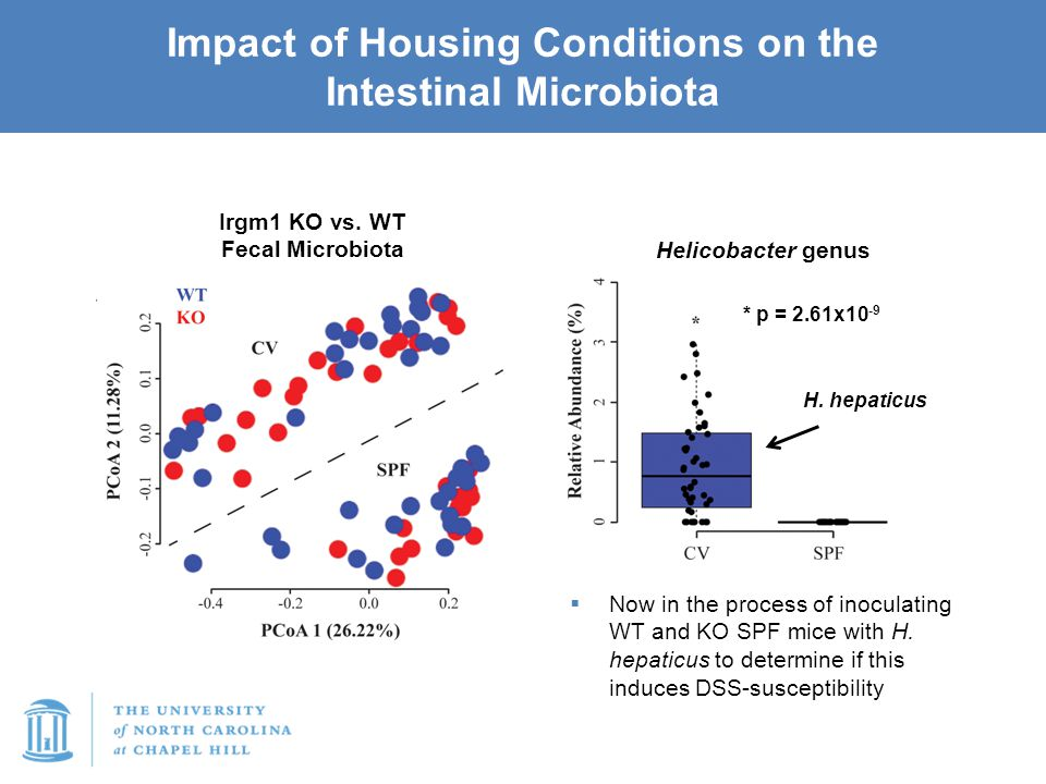 Impact of Housing Conditions on the Intestinal Microbiota Irgm1 KO vs. WT Fecal Microbiota * p = 2.61x10 -9 Helicobacter genus  Now in the process of