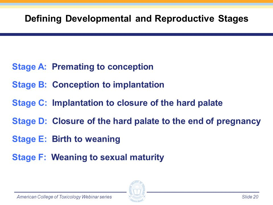 Slide 21American College of Toxicology Webinar series Exposure period for pharmaceutical testing Stages C to D A B C D E F Zygote Embryo Birth Juvenile Mating/fertility Reproductive Life Cycle Adolescence/puberty Conception Implantation Palate Closure Infant Sexual Maturity Weaning Reproductive and Developmental Stages