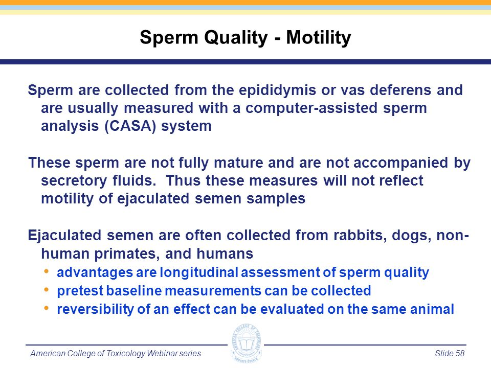 Slide 58American College of Toxicology Webinar series Sperm are collected from the epididymis or vas deferens and are usually measured with a computer-assisted sperm analysis (CASA) system These sperm are not fully mature and are not accompanied by secretory fluids.